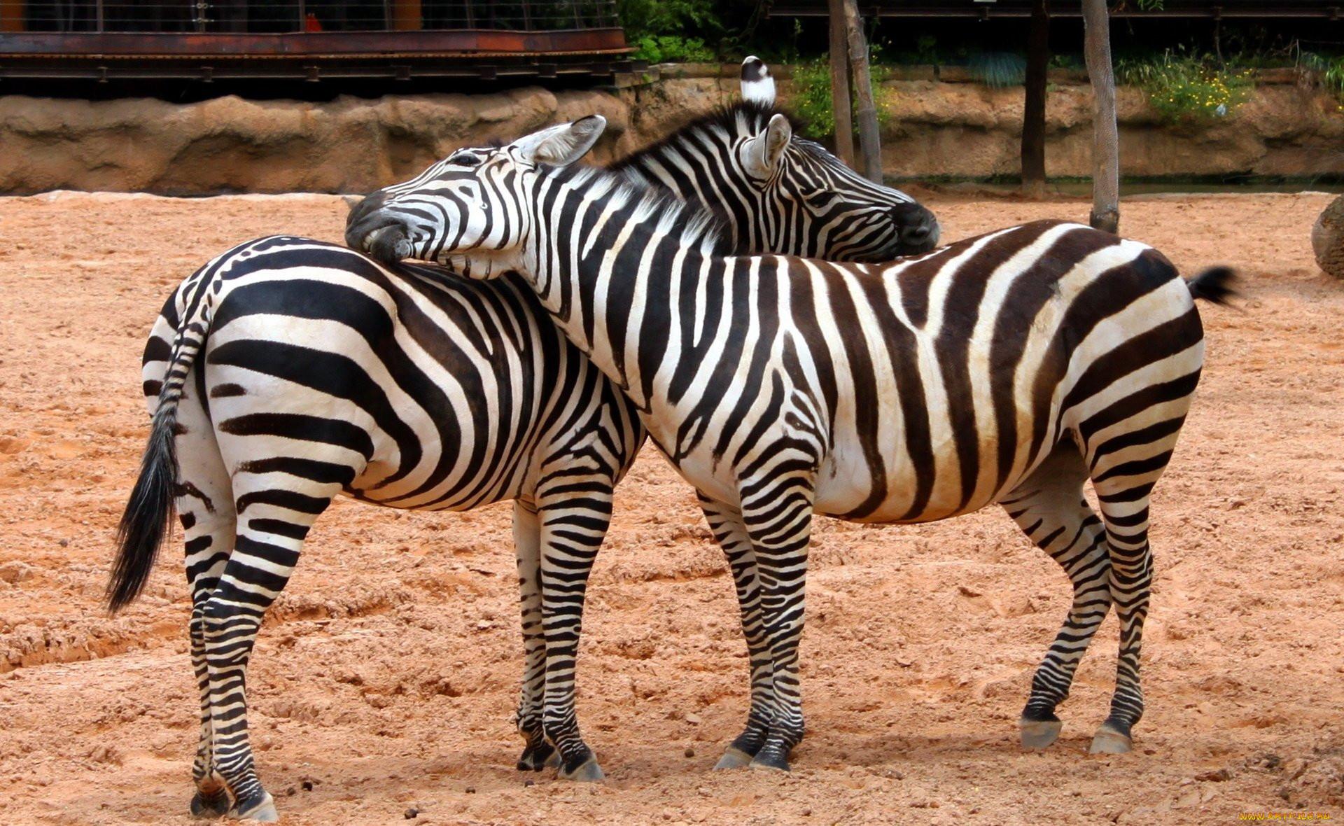 Зоопарк картинки зверей
